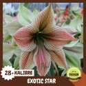 EXOTIC STAR